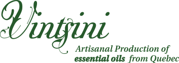 Vintsini, artisanal production of essential oils in Quebec